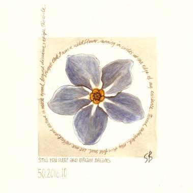 Wildflower. 2017 [gold, walnut ink on paper. 20x20cm]