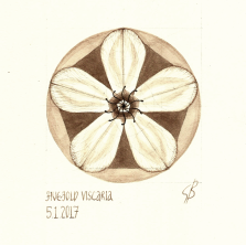 Five-fold Viscaria. 2017 [gold, walnut ink on paper. 20x20cm]