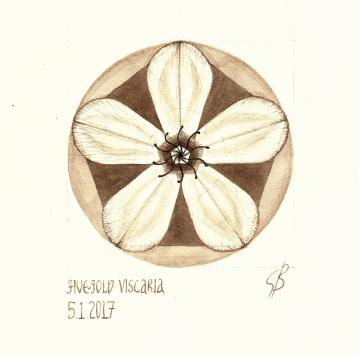 Five-fold Viscaria