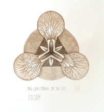 The Lily. 2017 [gold, walnut ink on paper. 20x20cm]