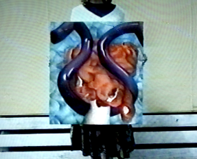 Mechanical Capture of the Rhizome, 1991. Oil on canvas. [Still from video]